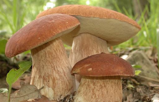 Обережно - гриби!