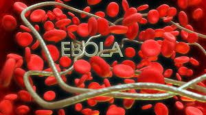 Геморагічна лихоманка Ебола