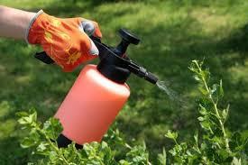 """Пестициди - фактор """"тихого"""" впливу"""