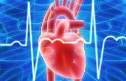 Серцево-судинні  захворювання  як фактор якості  і тривалості    життя