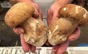 Профілактика отруєння грибами