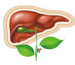 Що потрібно знати про вірусний гепатит А  і  де можна обстежитись